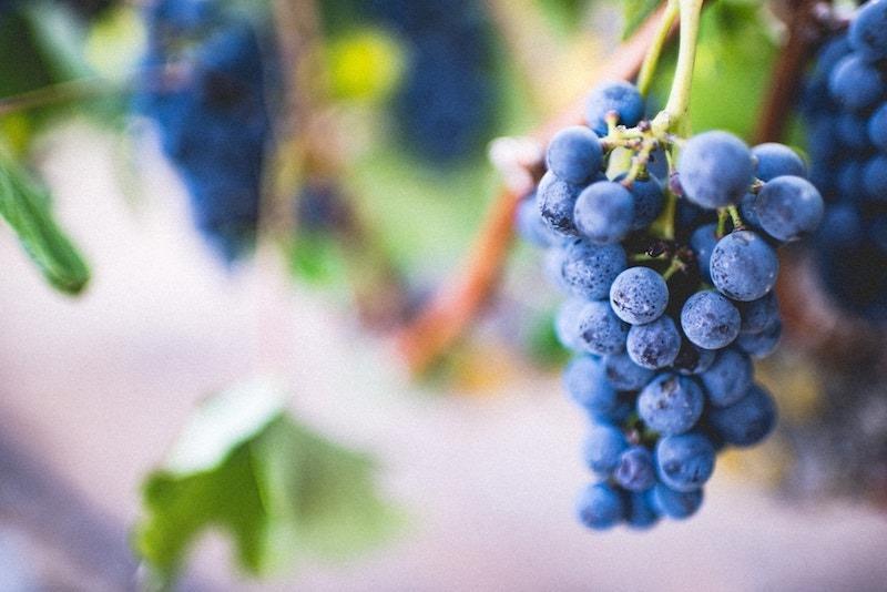 Best Wineries Near Leesburg, VA: Virginia Vineyard Month, Pt.1