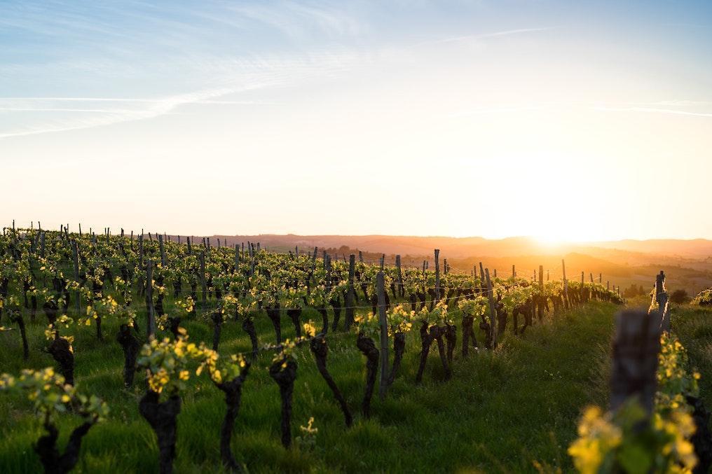 best wineries near shenandoah national park
